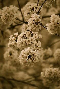 Michelle Cruz - Antique Bouquet