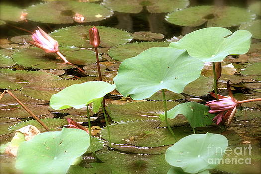 Danielle Groenen - Antique Lily Pond