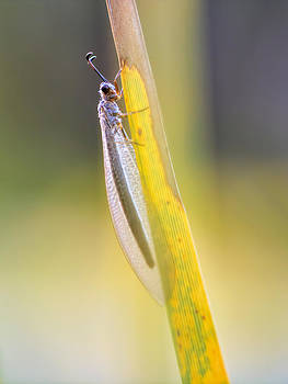 Antlion by Jenny Ellen Photography