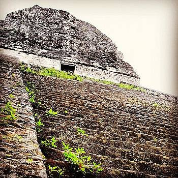 Anywhere But Finals. How About Tikal! by Victoria Haas