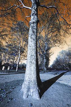 Apocalyptic tree by Domagoj Borscak