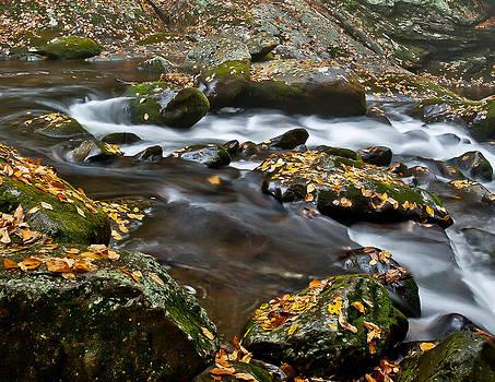 Appalachian Stream Flow by Charles Fletcher