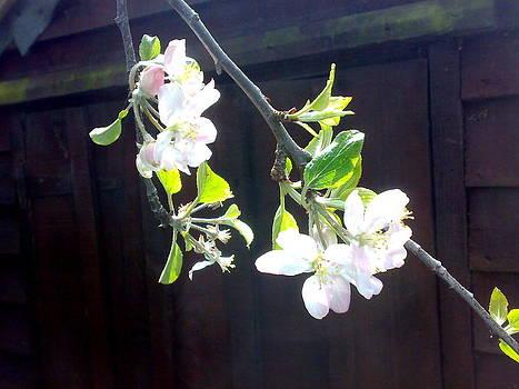 Apple Blossom Perfume by Tis Art