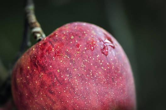 Apple Dew by Robert Wicker