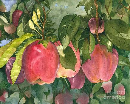 Apple Harvest by Laura Ramsey