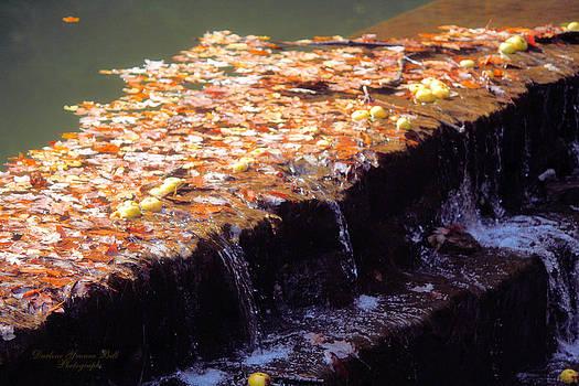 Darlene Bell - Apples Over The Dam