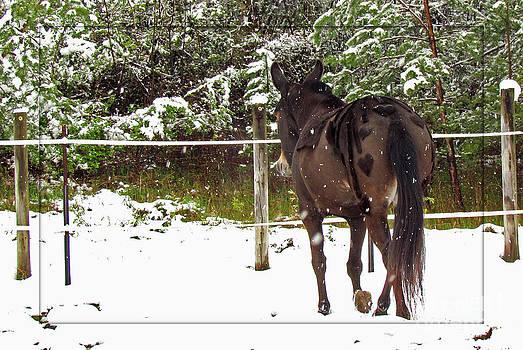 April Snow Stroll by Deborah Johnson