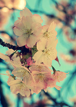 Aqua Skies and Pink Blossoms by Martha Hughes