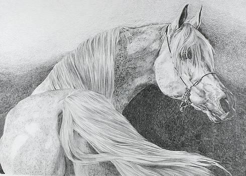 'Arabian Grey' by Sue  Miles