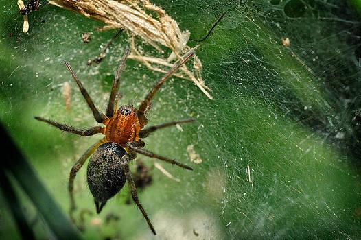 Zoran Buletic - Arachnid Quarantine Zone