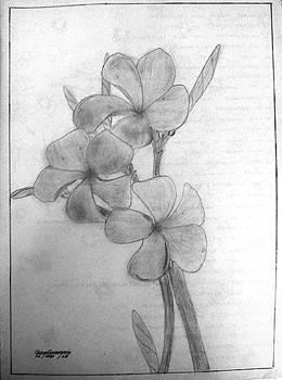 Araliya Flower by Deepthi Jayakody