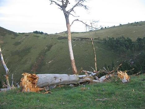 Arbol caido by Aitor Maria