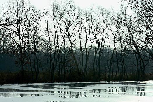 Arbor Abandon by Kelly Clower