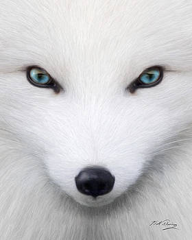 Arctic Fox by Bill Fleming
