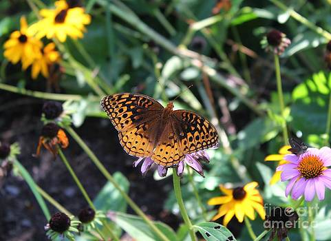 Arkansas Butterfly by Theresa Willingham