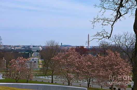 Tim Mulina - Arlington and Cherry Blossoms