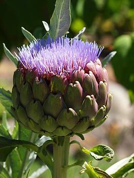 Artichoke In Bloom by Jim Moore