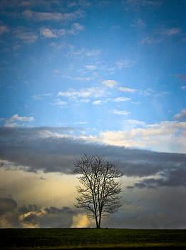 As Lovely as a Tree by Steve Buckenberger