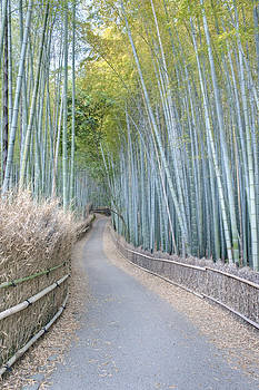 Asia Japan Kyoto Arashiyama Sagano by Rob Tilley