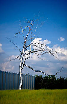 Askew - Roxy  Paine by Swift Family