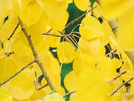 Aspen Gold by Donna Parlow