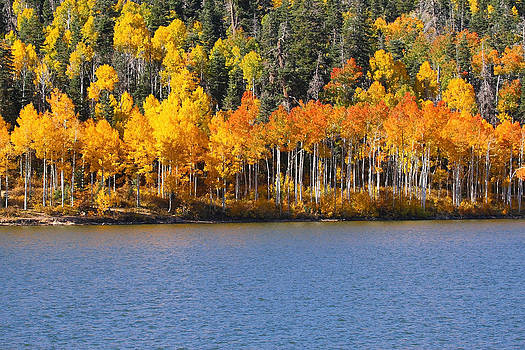 Aspen on the Water by Sharon I Williams