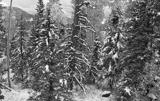 Nathan Mccreery - Aspen Pass