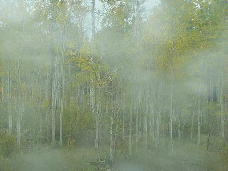 Angela Hansen - Aspens in Mist