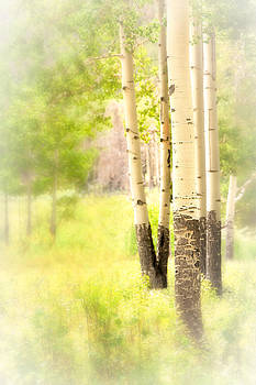 Aspens Rocky Mountain National Park 1547 by Ken Brodeur