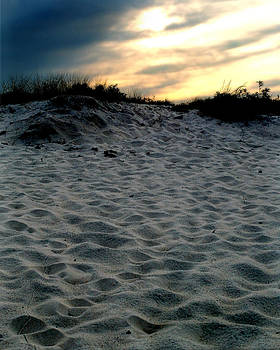 Assateague Dune by Michael Shreves