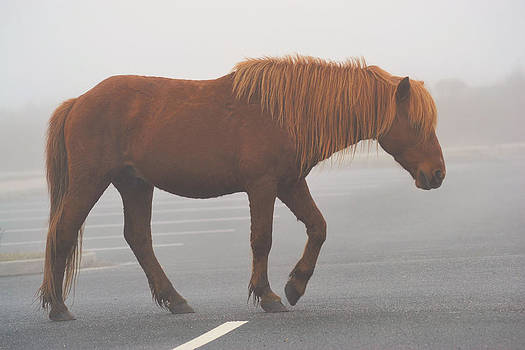 Assateague Pony by Kelly Reber
