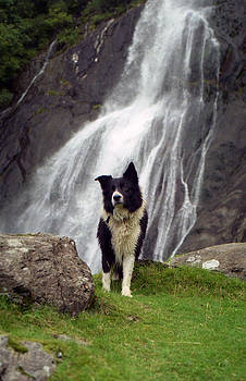 At the Falls with Indy by Michael Haslam