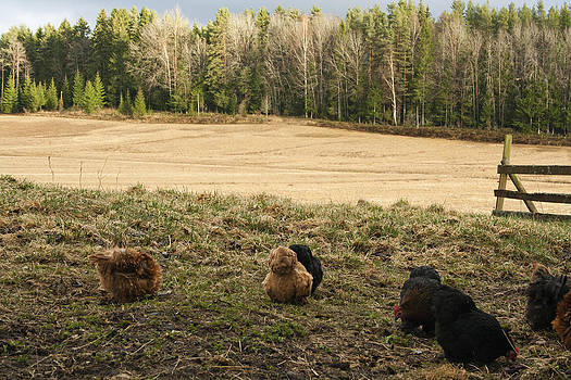 ...at the Farm by Fredrik Ryden