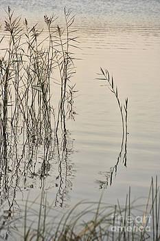 At the lake by Wedigo Ferchland