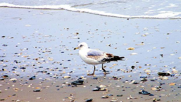 Atlantic city bird walk. by Antoine Clark