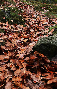 Auburn Leaves by Ruth MacLeod
