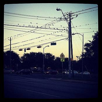 #austin #dusk #little #black #birds by Amanda Max