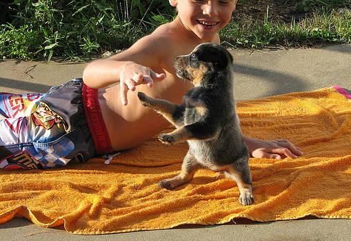 Australian Cattle Dog Pup by Victoria Sheldon