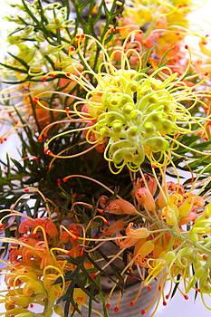 Australian Flower by Michael Clarke JP