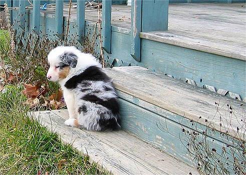 Leontine Vandermeer - Australian Shepherd Pup