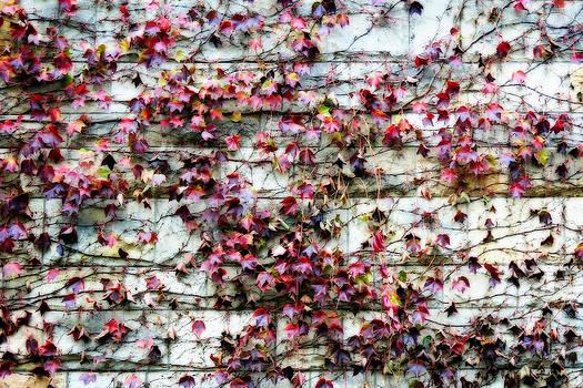 Zoran Buletic - Autmn On The Wall