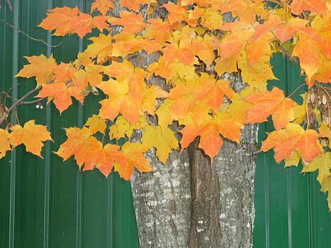 Autum Leaves by Pamela Turner