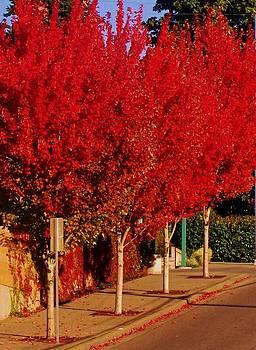 Autum Red by Ami Tirana