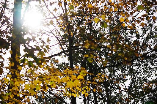 Autumn 2 by Shehan Wicks