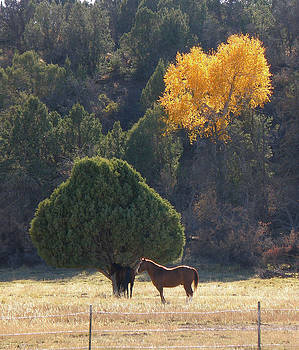 Autumn Afternoon by FeVa  Fotos