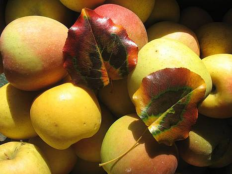 Autumn Apple Afternoon by Deb Martin-Webster