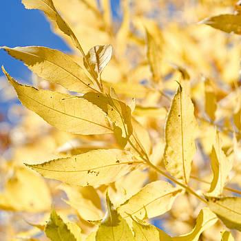 Margaret Pitcher - Autumn Arrives