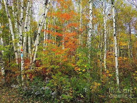 Autumn Beauty by Nina Nabokova