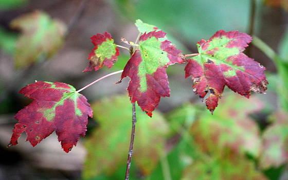 Annie Babineau - autumn begins