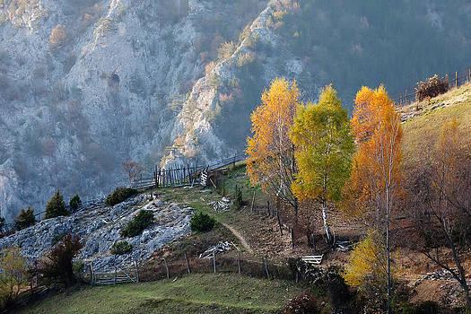 Autumn Birches by Evgeni Dinev
